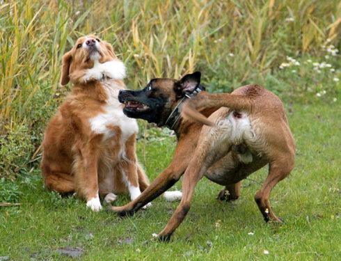 Honden (9)