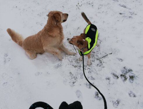 Max en Buddy