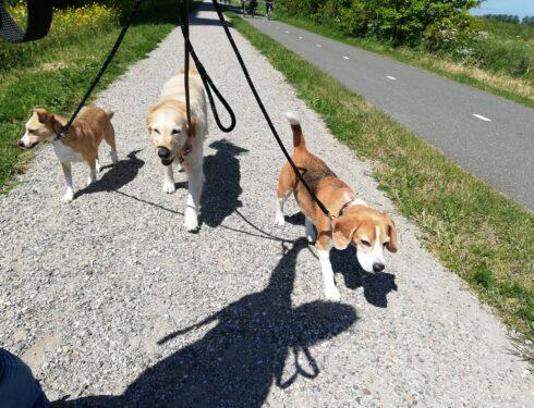 Buddy, Max en Paco