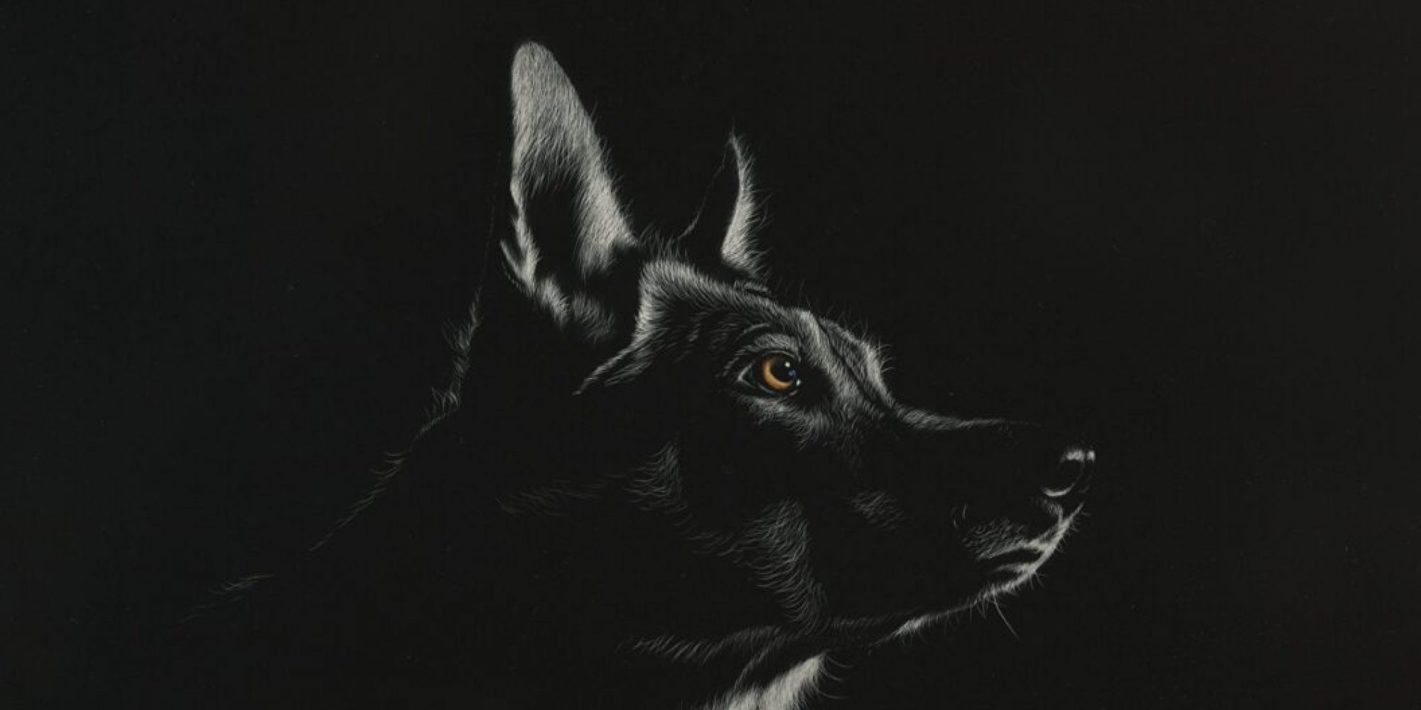 cropped-Wolves_Painting_Art_Head_Black_and_white_Black_531032_1920x1080.jpg