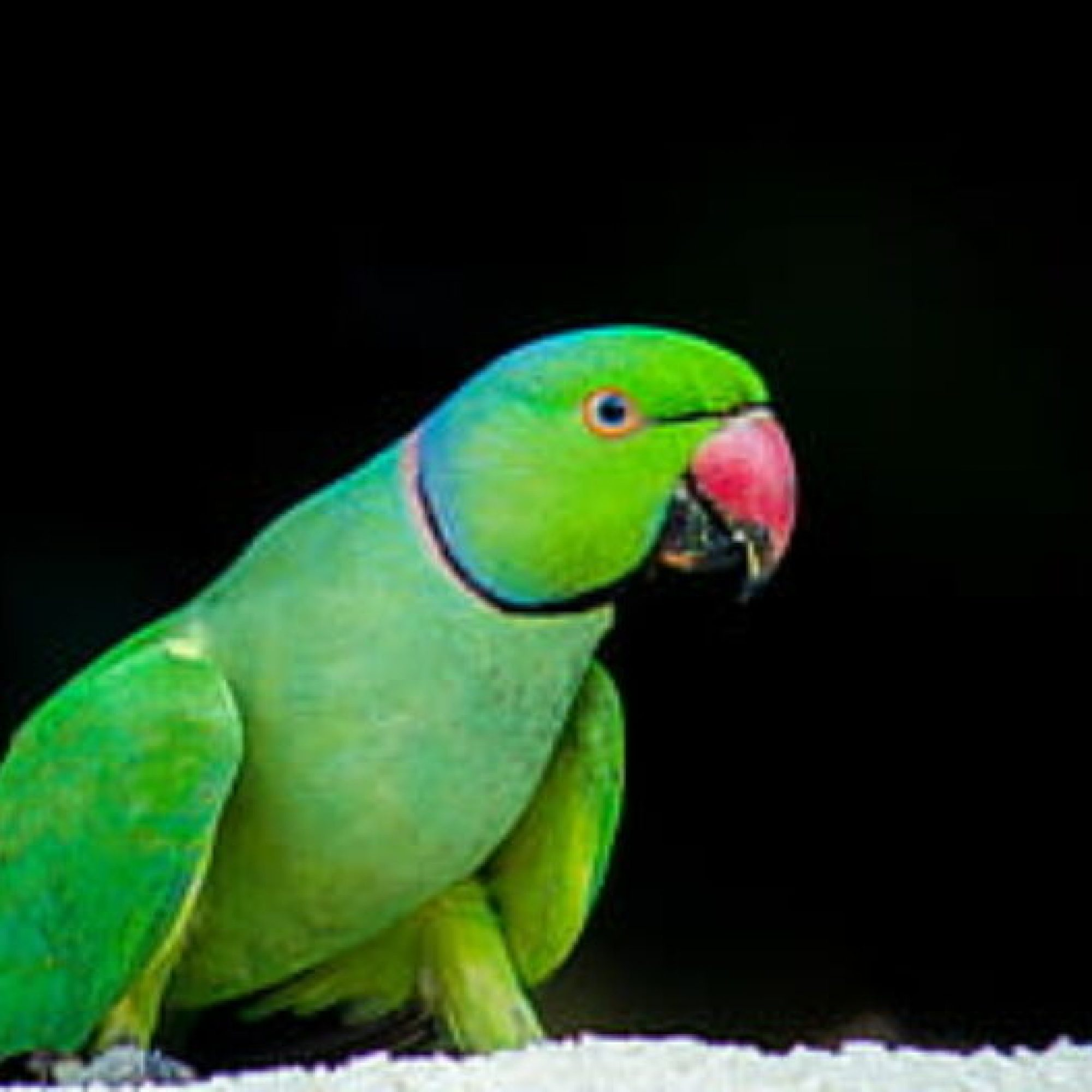 cropped-parrot-bird-feather-wildlife-thumbnail.jpg